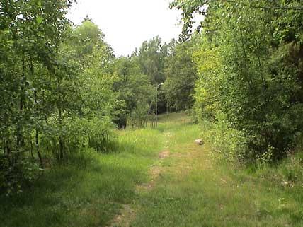 Skogspår
